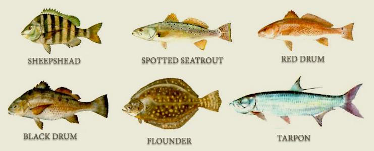 oakislandfishing