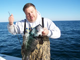 Huge Oak Island Black Sea Bass