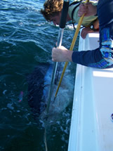 Oak Island Charter fishing bluefin tuna