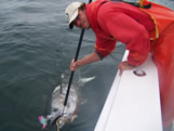 bald head island nc monster bluefin tuna