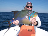 queen triggerfish of bald head island nc