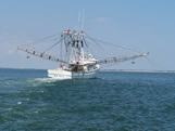 Shark fishing behind shrimp boat