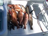 Boats limit of Big Oak Island Red Grouper