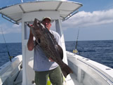 Monster bald head gag grouper