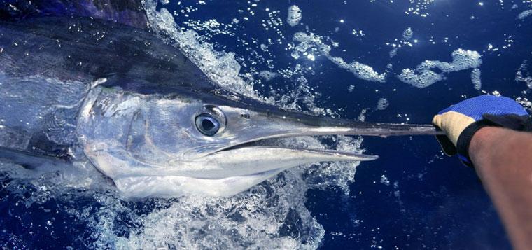 Oak Island Fishing Charters